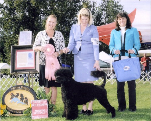 Bullet 15 mo - BISS Bred By Exhibitor Mt Rainier Working Dog Specialty - Aug. 2010
