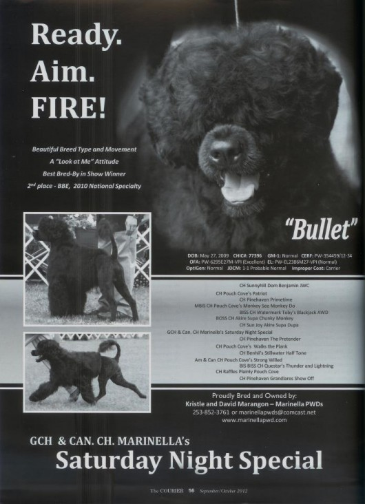 Bullet's ad in the Stud Dog edition of the Courier