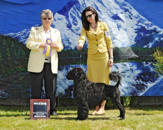 Bullet winning the breed at the Mt. Rainier Working Dog Specialty 2013