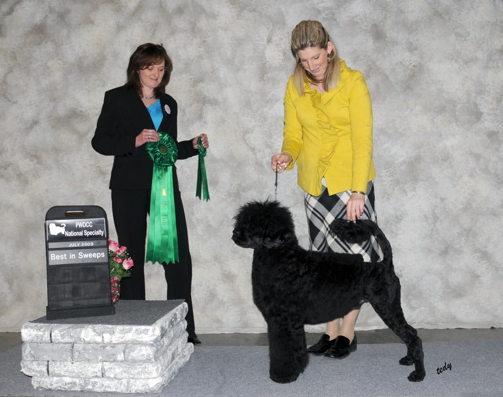 Bullet 10 mo Best Puppy in Sweeps PWDCC regional Apr 2010