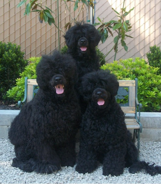 Willow with her kids... Bullet and Portia