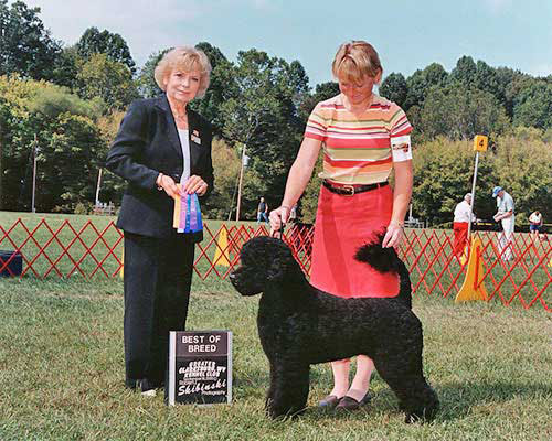 Digit Best Of Breed 2005