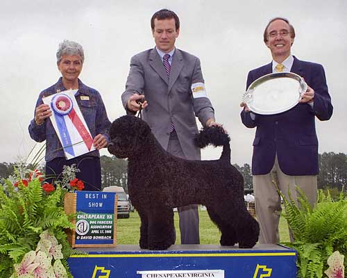 Digit Best In Show 2008