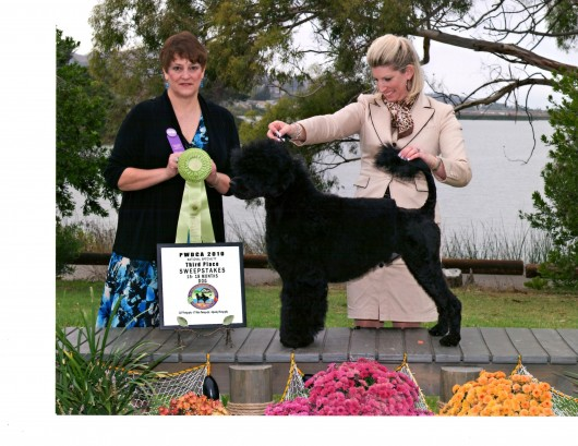 Bullet 16 mo 3rd place Sweepstakes - 15 - 18 mo class PWDCA National - San Luis Obispo Oct. 2010