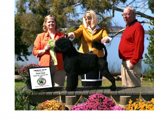Bullet 16 mo 2nd place Bred By Exhibitor class at PWDCA National - San Luis Obispo Oct. 2010