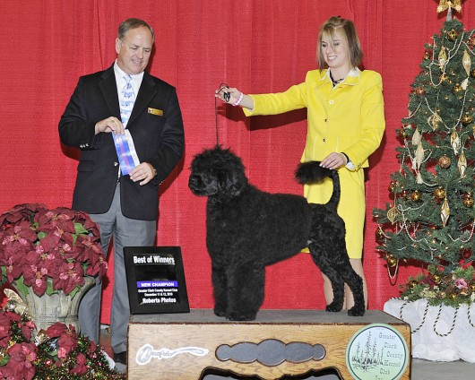 Bullet - 18 mo New American Champion