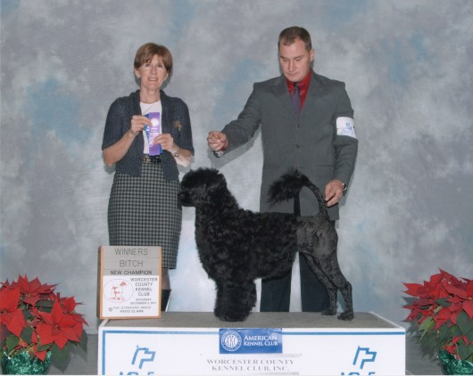 Portia 2 yrs - American Championship Dec 2011 with Rick Kreiger
