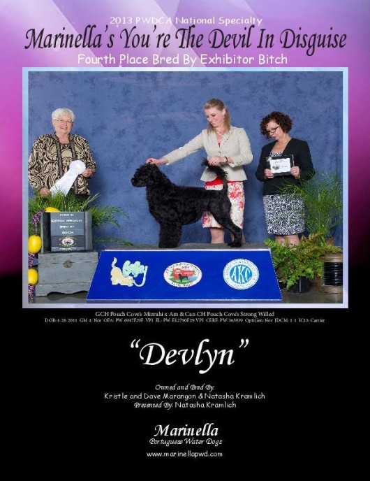 Devlyn 2013 PWDCA national 4th place bred by ad