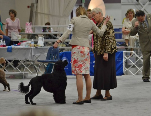 Devlyn showing off her pretty face to the judge at the 2013 PWDCA National
