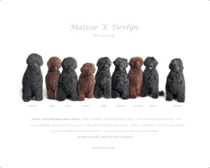 matisse-x-devlyn-family-photo